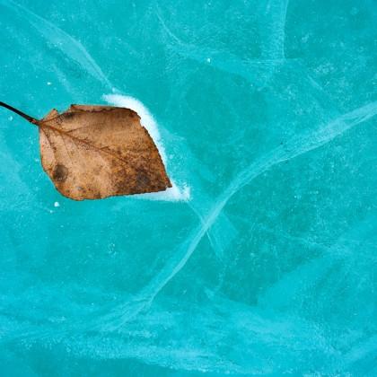 Abraham-Lake-Ice-Leaf