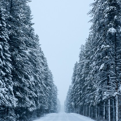 Bow-Valley-Parkway-Winter-Trees