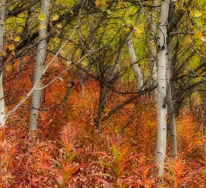 Coleman-Slopes-Fall-Colour