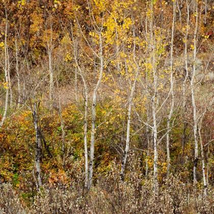 Dry-Island-Fall-Trees-1