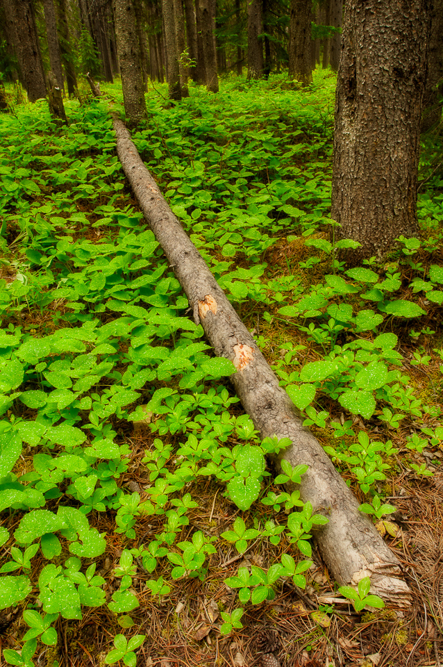 Fallen-Log-Forest-Floor