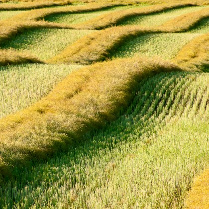 Farm-Field-Crop-Rows