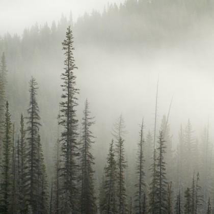 Fog-Frost-Trees-1