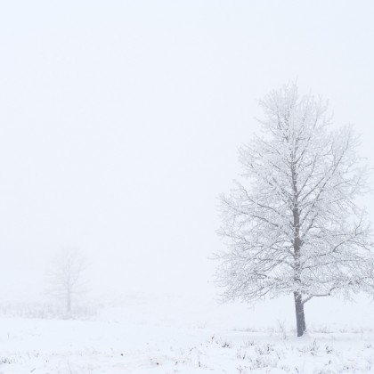 Fog-Frost-Trees-2