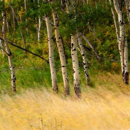 Glenbow-Ranch-Fall-Trees-1