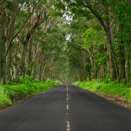 Kauai-Maluhia-Road-Tree-Tunnel