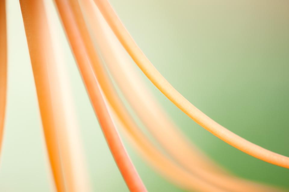Tiger Lily filament detail, Trochu Arboretum, Trochu, Alberta, Canada
