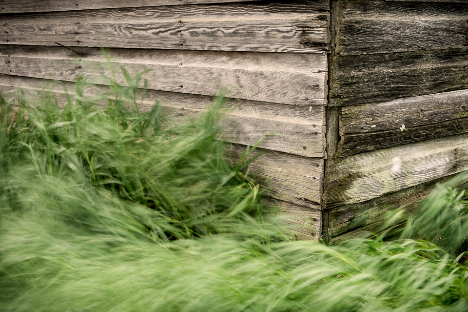 Old-Shed-Blowing-Grass