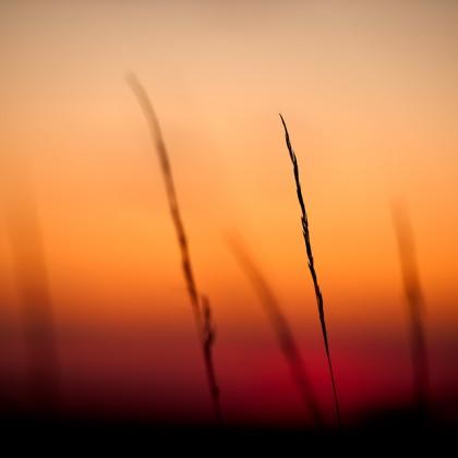 Prairie-Grass-Sunset