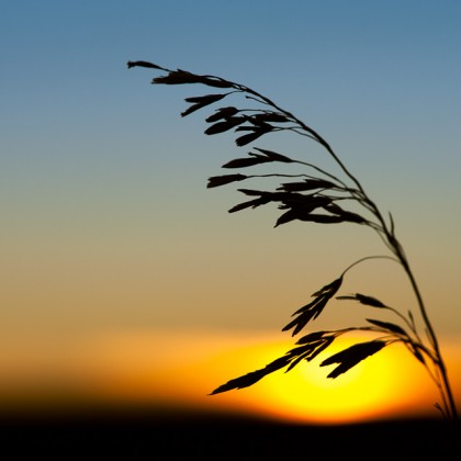 Prairie-Sunset-Silhouette
