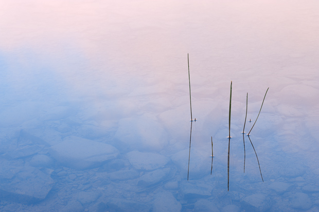 Grass reflected in Maskinonge Lake at sunrise
