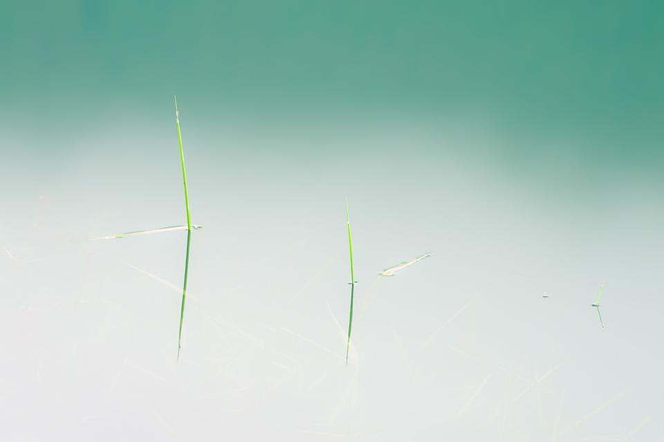Wedge-Pond-Grass-Reflection