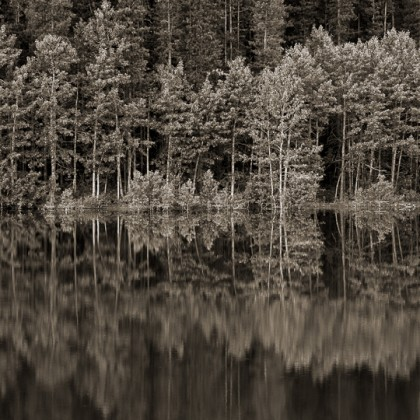 Wedge-Pond-Trees-Reflectoin-BW