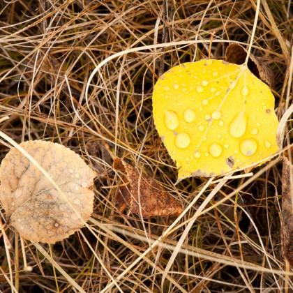 Wet-Fall-Leaves-Grass
