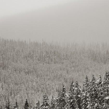 Winter-Fog-Tree-Rows